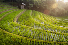 Bali Rice Fields. The village of Belimbing, Bali, boasts some of the most beautiful and dramatic rice terraces in all of Indonesia. Morning light is a wonderful Royalty Free Stock Photography