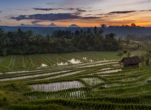 Bali Rice Fields. The village of Belimbing, Bali, boasts some of the most beautiful and dramatic rice terraces in all of Indonesia. Morning light is a wonderful Royalty Free Stock Image