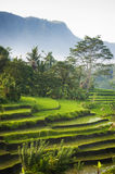 Bali Rice Fields. The village of Sidemen, in east Bali, boasts some of the most beautiful and dramatic rice terraces in Indonesia Royalty Free Stock Photography