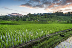 Bali Rice Fields. The village of Sidemen, in east Bali, boasts some of the most beautiful and dramatic rice terraces in Indonesia Stock Photo
