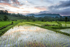 Bali Rice Fields. The village of Sidemen, in east Bali, boasts some of the most beautiful and dramatic rice terraces in Indonesia Stock Photography