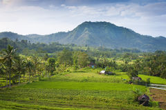 Bali Rice Fields. The village of Sidemen, in east Bali, Indonesia, boasts some of the most beautiful and dramatic rice fields in all of Asia.  Artists and Stock Photo