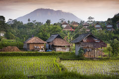Bali Rice Fields. The village of Sidemen, in east Bali, Indonesia, boasts some of the most beautiful and dramatic rice fields in all of Asia. Mt. Agung, a Royalty Free Stock Image