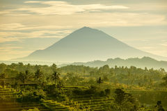 Bali Rice tarasy Zdjęcia Stock