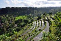 Bali rice terrace. Green rice terraces around Tirta Ganga, Bali, Indonesia Stock Photo