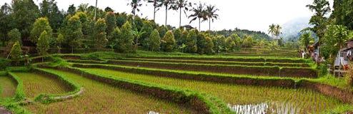 Bali rice terrace Stock Photos