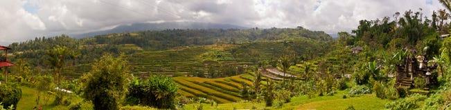 Bali rice terrace Royalty Free Stock Photography