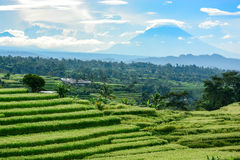 Bali rice terrace, rice field of Jatiluwih Royalty Free Stock Photo