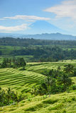 Bali rice terrace, rice field of Jatiluwih Royalty Free Stock Photography