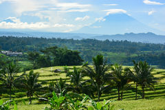 Bali rice terrace, rice field of Jatiluwih Stock Photography