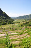Bali Rice Terraces. Scenic rice paddies in Bali, Indonesia Royalty Free Stock Photo