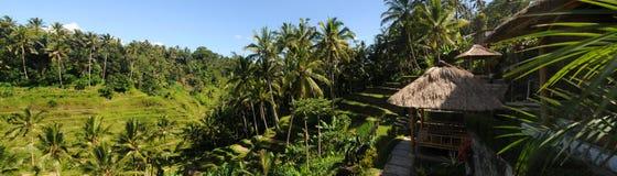 Bali Rice Terraces. Panorama od rice terraces in Bali near Ubud Stock Photography