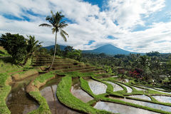 Bali Rice Terraces. The beautiful and dramatic rice fields of Jatiluwih in southeast Bali have been designated the prestigious UNESCO world heritage site Stock Images