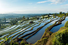 Bali Rice Terraces. The beautiful and dramatic rice fields of Jatiluwih in southeast Bali have been designated the prestigious UNESCO world heritage site Royalty Free Stock Photo
