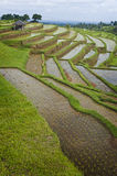Bali Rice Terraces Stock Photos