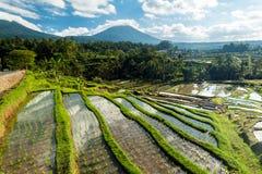 Jatiluwih Rice Terraces Royalty Free Stock Photos