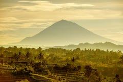 Bali Rice Terraces. Rice fields of Jatiluwih Stock Image