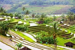 Bali Rice Terraces. Rice fields of Jatiluwih Royalty Free Stock Photography