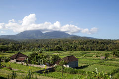 Bali rice terraces. Bali, Indonesia - July 02, 2015: Green rice terraces and local houses Stock Image