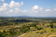 Bali rice terraces. Bali, Indonesia - July 02, 2015: View of green rice terraces and local houses Stock Photography