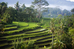 Bali Rice Terraces. The most beautiful rice terraces in Bali, Indonesia, can be seen in eastern Bali near the village of Sidemen. Steeply terraced with verdant Stock Image