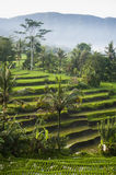 Bali Rice Terraces. The most beautiful rice terraces in Bali, Indonesia, can be seen in eastern Bali near the village of Sidemen. Steeply terraced with verdant Royalty Free Stock Photography