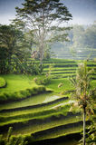 Bali Rice Terraces. The most beautiful rice terraces in Bali, Indonesia, can be seen in eastern Bali near the village of Sidemen. Steeply terraced with verdant Stock Images