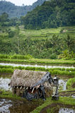 Bali Rice Terraces. The real Bali can be found outside the tourist areas. These rice terraces can be seen in east Bali near a village called Sidemen. Grass huts Royalty Free Stock Images