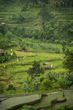 Bali Rice Terraces. The real Bali can be found outside the tourist areas. These rice terraces can be seen in east Bali near a village called Sidemen. Grass huts Stock Images