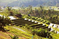 Bali Rice Terraces. Rice fields of Jatiluwih Stock Photo