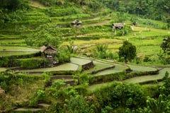 Bali Rice Terraces Royalty Free Stock Photo