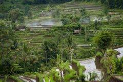 Bali Rice Terraces. Some of the most beautiful and dramatic rice fields can be seen near the village of Sidemen in eastern Bali, Indonesia Royalty Free Stock Images