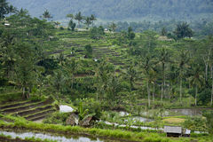 Bali Rice Terraces. Some of the most beautiful and dramatic rice fields can be seen near the village of Sidemen in eastern Bali, Indonesia Royalty Free Stock Photos