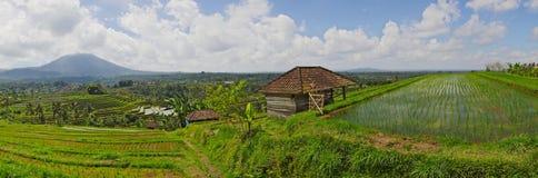 Bali risterrass Arkivfoton