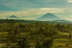 Bali risterrasser Arkivfoton