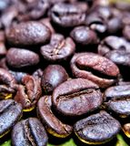 Bali roasted coffee bean stock photography