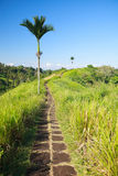Bali rural area Royalty Free Stock Photo