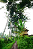 Bali rural scenic view with farmer hut. A peaceful and green country side scene in the rice fields of Bali with a little farmer  straw hut beside the stone Stock Photography