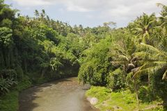 bali rzeka Obraz Stock