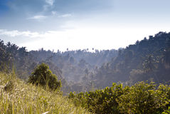 bali skog indonesia Arkivfoto