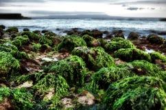 bali strand Royaltyfri Foto
