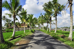 Bali street with coconut trees and rice. Paddies under a blue sky, lush landscape in Indonesia, eat pray love Royalty Free Stock Photos