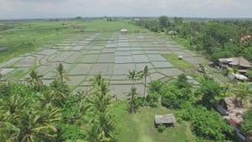 Bali Sunie palmy Z Ryżową pole anteną 4k zdjęcie wideo