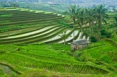 Bali tarasu pole obraz stock