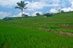 Bali Terrace Field Royalty Free Stock Photography