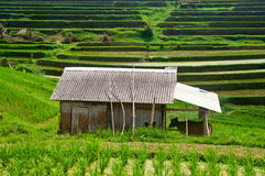 Bali Terrace Field Stock Photography