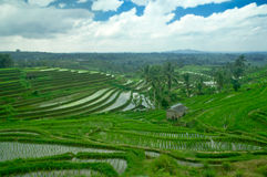 Bali Terrace Field Royalty Free Stock Photos