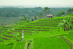 Bali Terrace Field Stock Photos