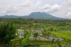 Bali Stock Photos