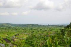Bali Royalty Free Stock Image